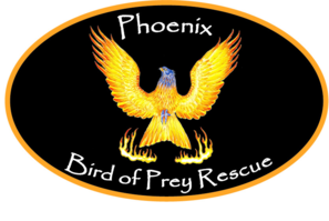 Phoenix Bird of Prey Rescue